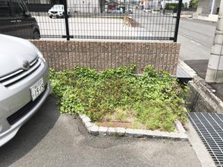 20180517fukuyama3.jpg